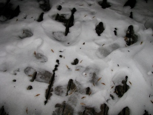 tracks from the solstice dance