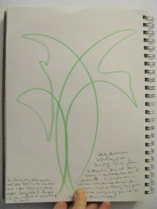 dance-90-maidenhair-fern